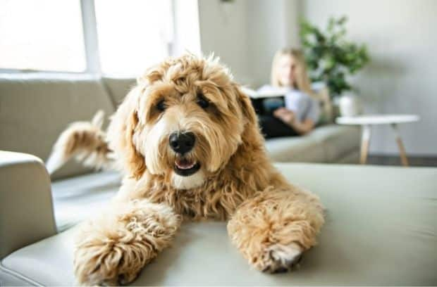 Tips for Finding Dog Care While You're on Vacation
