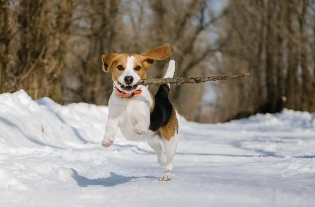 Activities That Train and Entertain Your Dog