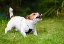 Emotional Behavior in Dogs to Watch Out For