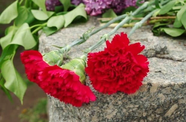 The Proper Flowers To Leave at Gravestones