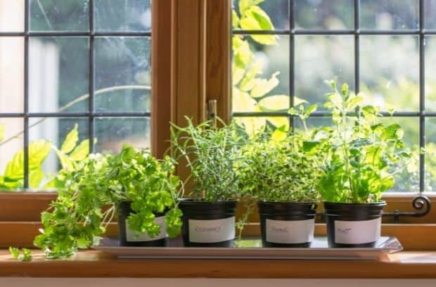 Everything You Need to Start an Indoor Herb Garden Today