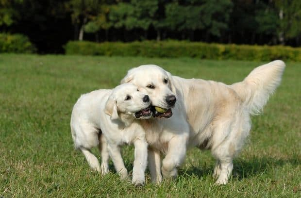 The Friendliest and Most Social Dog Breeds